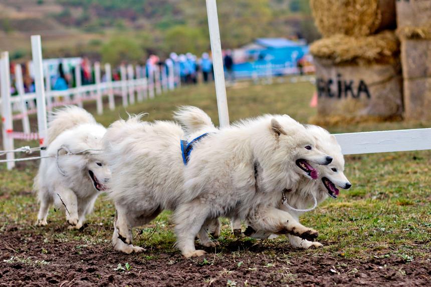 concurs-canin-gheorgheni