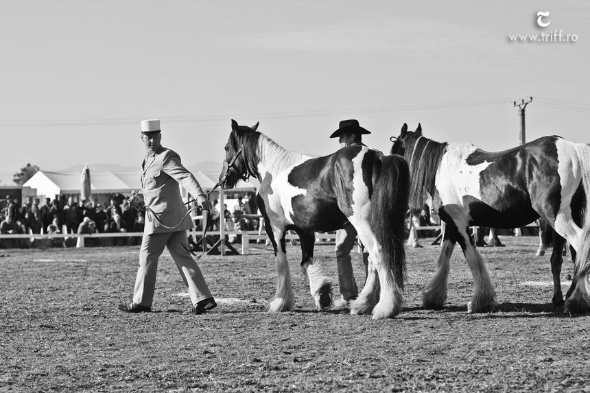 gyergyoszentmiklos lovasnapok 01