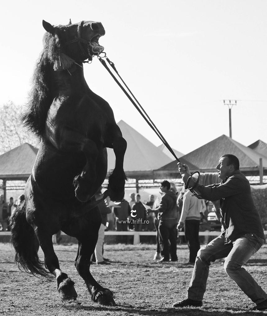 gyergyoszentmiklos lovasnapok 02