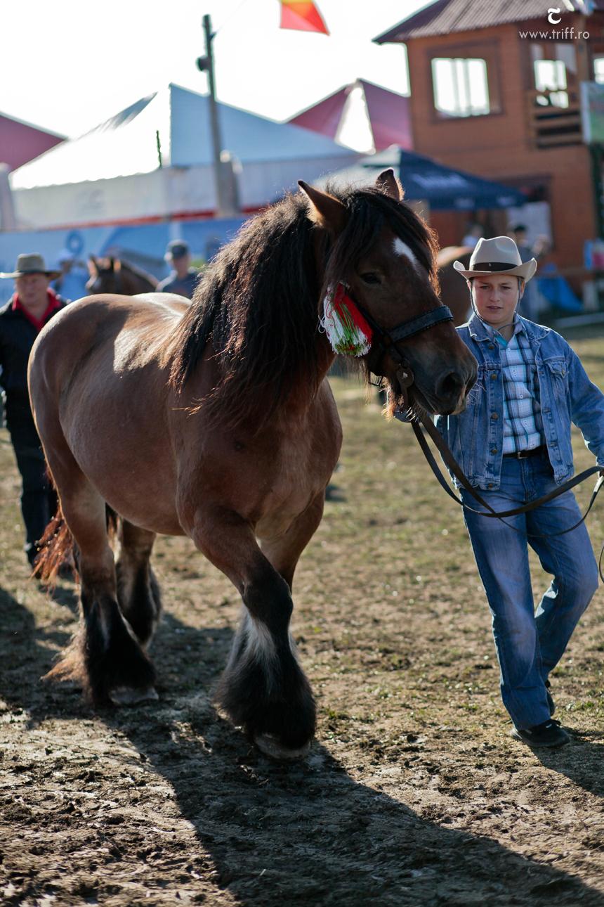 gyergyoszentmiklos lovasnapok 23