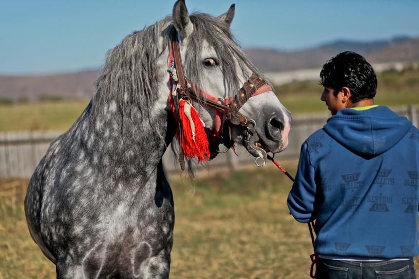 Gyergyói lovasnapok Gyergyó
